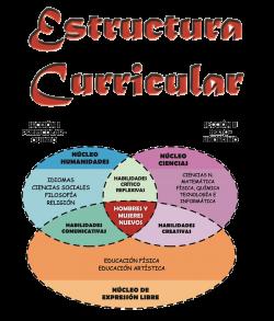estructura_curricular